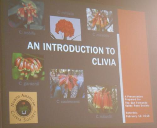 Clivia1338