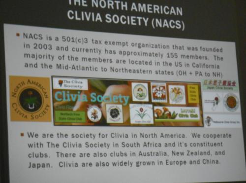 Clivia1368